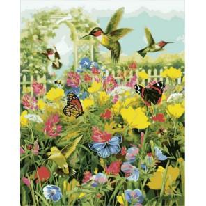 Колибри и бабочки Раскраска картина по номерам акриловыми красками на холсте