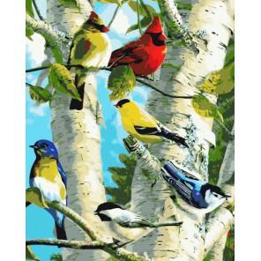 Птички на березе Раскраска картина по номерам акриловыми красками на холсте
