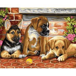 Три друга Раскраска картина по номерам акриловыми красками на холсте
