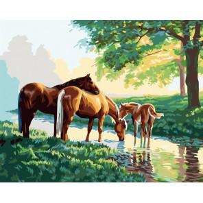 Лошади на водопое Раскраска картина по номерам акриловыми красками на холсте Color Kit