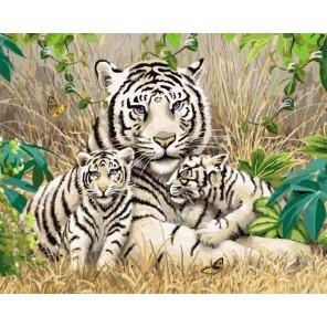 Семья белых тигров Раскраска картина по номерам акриловыми красками на холсте