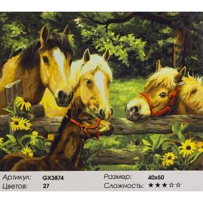 Лошади и пони Раскраска картина по номерам на холсте