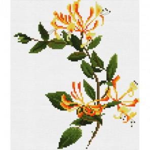Страстоцвет изящный Набор для вышивания Белоснежка