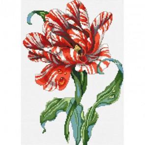 Тигровый тюльпан Набор для вышивания Белоснежка