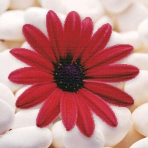 Алый цветок Набор для вышивания Белоснежка