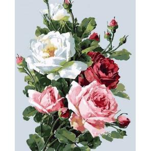 Розы садовые Раскраска картина по номерам акриловыми красками на холсте