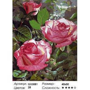Кустовая роза Раскраска картина по номерам акриловыми красками на холсте
