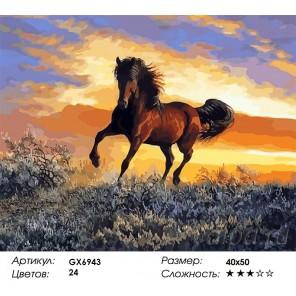 Скакун на закате Раскраска картина по номерам на холсте