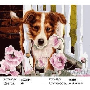 Количество и сложность Пес в саду Раскраска картина по номерам акриловыми красками на холсте