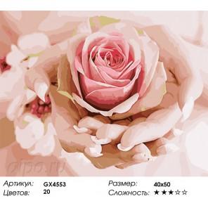 Количество цветов и сложность Роза в ладонях Раскраска картина по номерам акриловыми красками на холсте