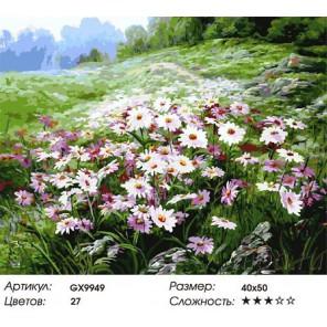 Количество цветов и сложность Разноцветные ромашки Раскраска картина по номерам акриловыми красками на холсте