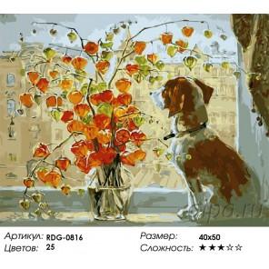 Количество цветов и сложность Собака на окне Раскраска картина по номерам акриловыми красками на холсте