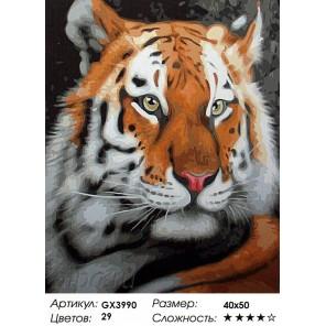 Количество цветов и сложность Тигр Раскраска картина по номерам акриловыми красками на холсте