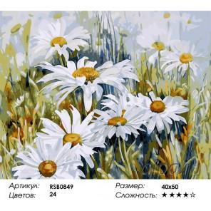 Количество цветов и сложность Ромашки в поле Раскраска картина по номерам акриловыми красками на холсте