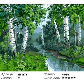 Речка в березовой роще Раскраска картина по номерам на холсте