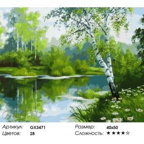 Березовый край Раскраска картина по номерам на холсте