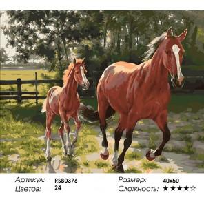 Количество цветов и сложность Лошадь и Жеребенок Раскраска картина по номерам акриловыми красками на холсте
