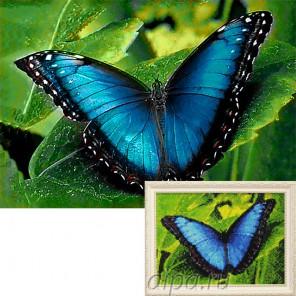 Голубой морфо Алмазная вышивка мозаика Гранни