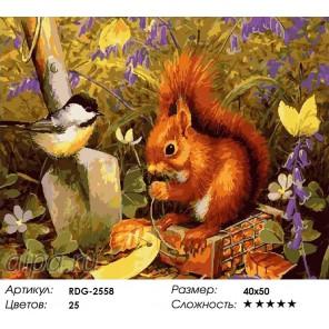 Белочка Раскраска картина по номерам акриловыми красками на холсте
