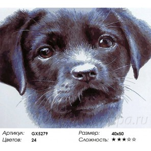 Очаровательный щенок Раскраска картина по номерам акриловыми красками на холсте