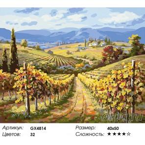 Виноградники Шато-Марго Раскраска картина по номерам на холсте