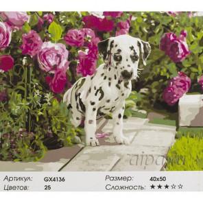 Далматинец в розах Раскраска картина по номерам акриловыми красками на холсте