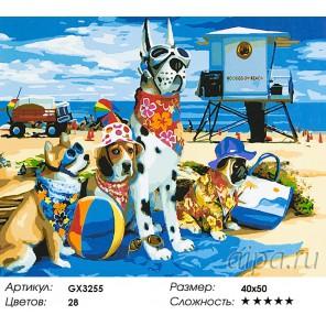 Количество цветов и сложность Друзья на пляже Раскраска картина по номерам акриловыми красками на холсте