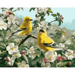 Щеглы весной 21680 Раскраска по номерам акриловыми красками Plaid