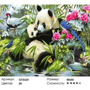 Милые панды Раскраска картина по номерам на холсте