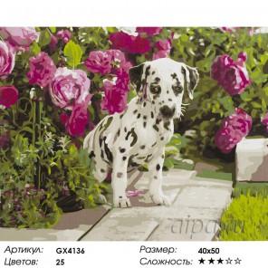 Количество цветов и сложность Далматинец Раскраска картина по номерам акриловыми красками на холсте