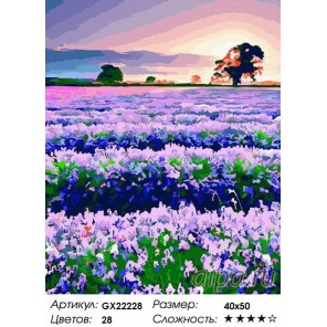 Лавандовое благоухание Раскраска картина по номерам на холсте