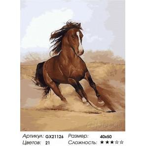 Скакун Раскраска картина по номерам акриловыми красками на холсте