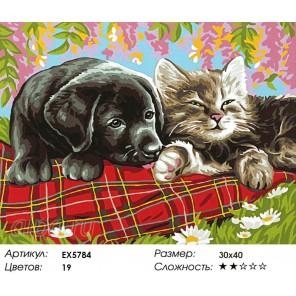 Количество цветов и сложность Щенок и котенок Раскраска картина по номерам акриловыми красками на холсте