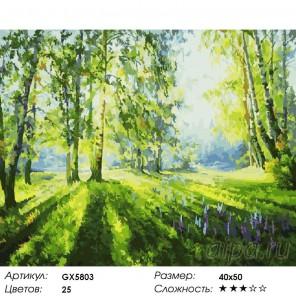 Количество цветов и сложность Летние березки Раскраска картина по номерам акриловыми красками на холсте