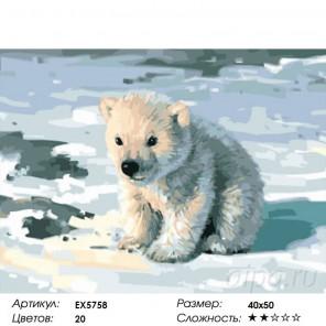 Милый медвежонок Раскраска картина по номерам акриловыми красками на холсте