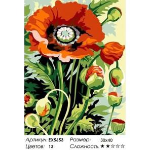 Бутоны мака Раскраска картина по номерам на холсте