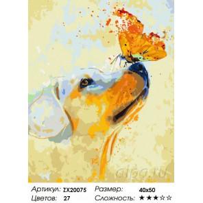 Количество цветов и сложность Золотистый ретривер Раскраска картина по номерам акриловыми красками на холсте