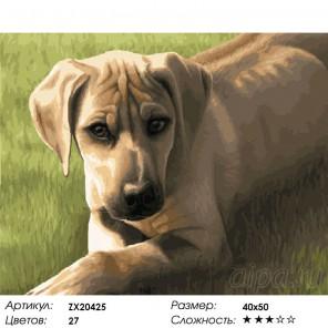 Количество цветов и сложность Надежный друг Раскраска картина по номерам акриловыми красками на холсте
