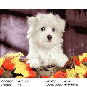 Белый щенок Раскраска картина по номерам на холсте