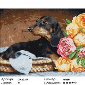 Количество цветов и сложность Такса Раскраска картина по номерам на холсте