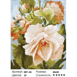 Роза Раскраска ( картина ) по номерам на холсте Белоснежка