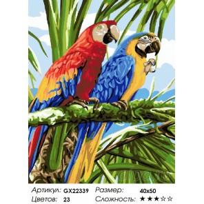 Попугаи ара Раскраска картина по номерам на холсте