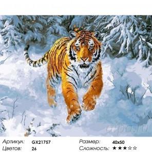 Сибирский император Раскраска картина по номерам на холсте