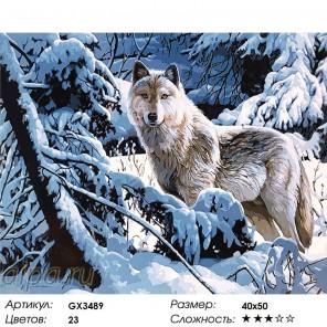 Одинокая волчица Раскраска картина по номерам на холсте