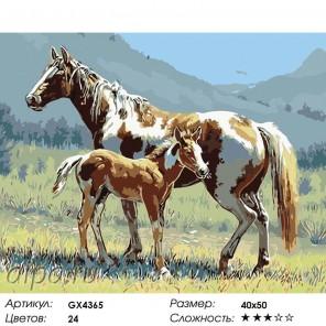 Жеребенок Раскраска картина по номерам на холсте