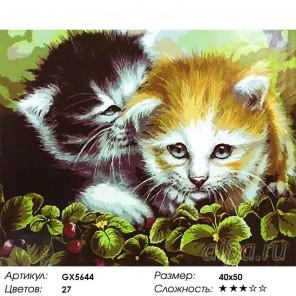 Количество цветов и сложность Кошачья дружба Раскраска картина по номерам на холсте
