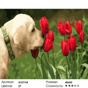 Аромат тюльпанов Раскраска картина по номерам на холсте