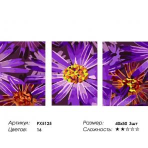 Фиолетовые ромашки Триптих Раскраска картина по номерам на холсте