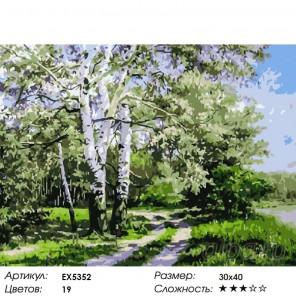 Весенние березки Раскраска картина по номерам на холсте