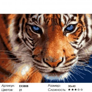 Количество цветов и сложность Голубоглазый тигр Раскраска картина по номерам на холсте